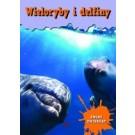Wieloryby i delfiny Świat zwierząt